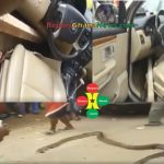 Watch Video: Sakawa Boy Turns Into A Big Snake To Swallow A Girl In His Car